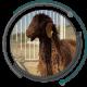 پرورش گوسفند از طریق اپلیکیشن