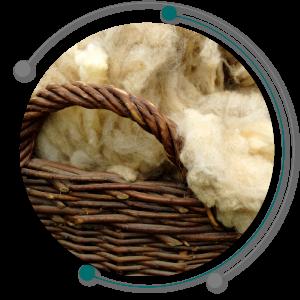 کیفیت پشم گوسفندان به تغذیه گوسفندان وابسته است.
