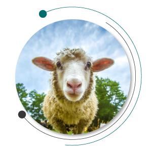 بیماری گوسفند و بیماری دام