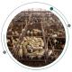 ساخت دامداری گوسفندی